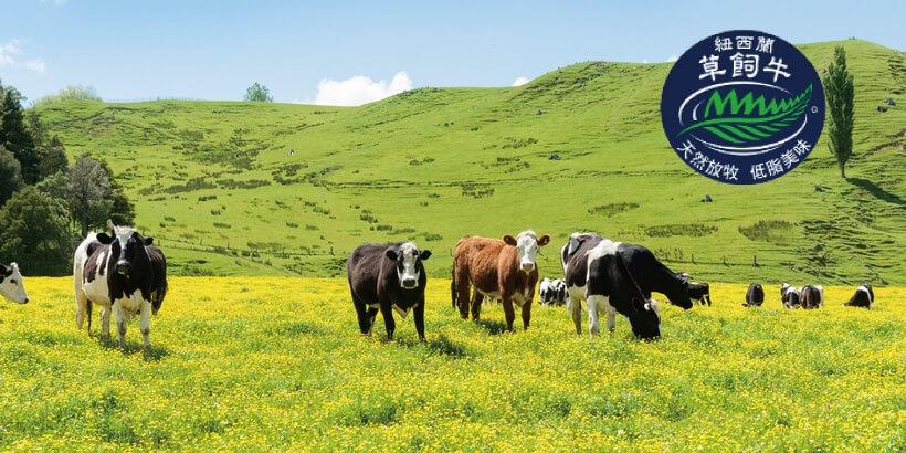 紐西蘭草飼牛吃什麼?