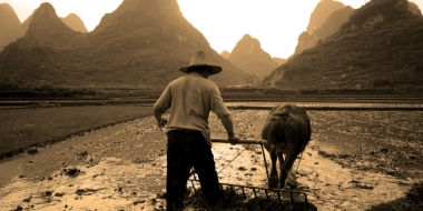 為什麼有些人不吃牛肉?吃牛真的會衰嗎?