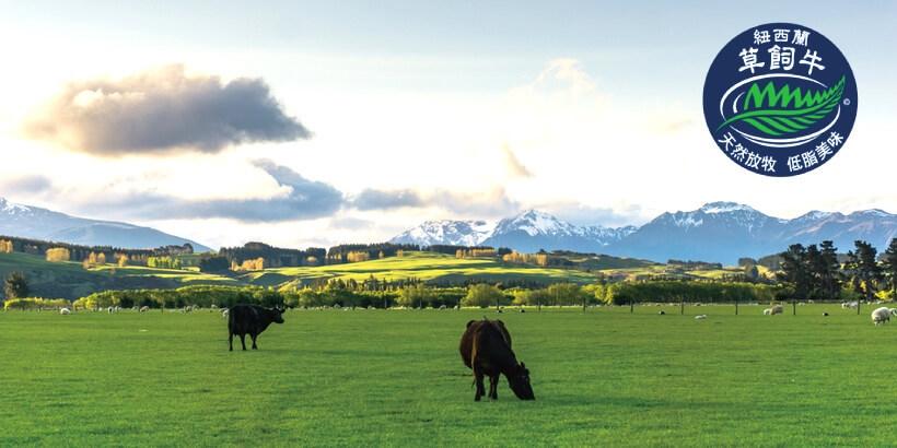 紐西蘭牛肉優質的原因?