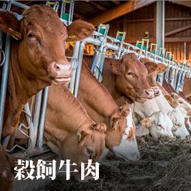 穀飼牛專區