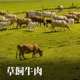 草飼牛專區